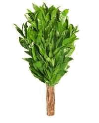 Веник чайный (свежемороженный)