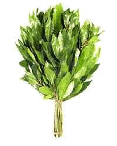 Веник лавровый(свежемороженный)