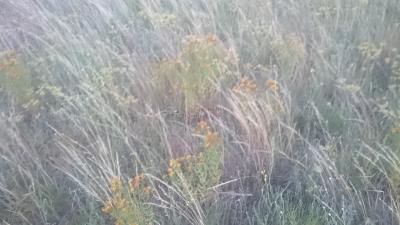Веник из травы Зверобой, ЮС